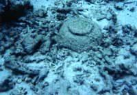 倉木崎海底遺物の様子
